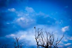 Betekenis van eenzaamheid en het snakken stock foto's