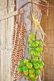Betel - καρύδια (Areca catechu Linn) Στοκ Εικόνα