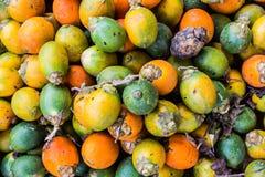 Betel - καρύδι που τίθεται στο έδαφος για την ξήρανση. (Areca catechu) Στοκ Εικόνες