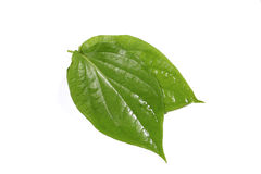 Betel leaf Royalty Free Stock Image