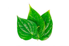 Betel leaf is herbal Royalty Free Stock Photo