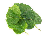 Betel leaf Royalty Free Stock Photography