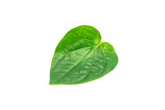 Betel leaf isolated on white background Royalty Free Stock Photos