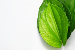 Betel leave stock image