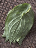 Betel leaves Stock Photos