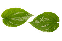 Betel leaves (isolated on white) Stock Images