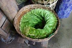 Betel leaves, Myanmar Royalty Free Stock Photos