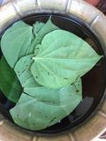 Betel leaves or Paan Stock Photography