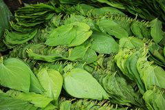 Betel leaves are ready for consumption. Container with green betel leaves ready for consumption as a food order Stock Photography