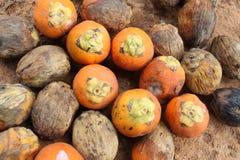 Betel Nut or Areca Nut Royalty Free Stock Image