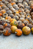 Betel nut Stock Images