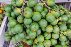 Betel nut Royalty Free Stock Images