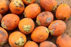 Betel Nut Or Areca Nut Stock Images