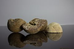 Betel nut is placed on a black background with reflection.  Royalty Free Stock Photos