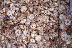 Betel Nuts at Market. Betel nut slices for sale at a local market in Mawlamyine in southern Myanmar Royalty Free Stock Photo