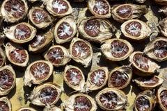 Betel nut under the sun stock photo