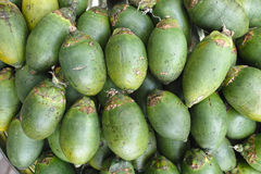 Betel nuts Royalty Free Stock Images