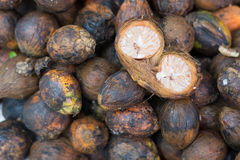 Betel nuts Stock Images