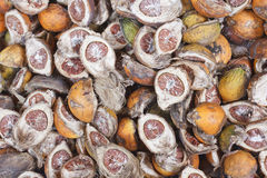 Betel nuts drying Royalty Free Stock Images
