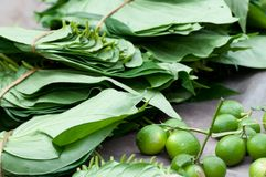 Betel on open market. Bunch if leaves and lime. Tradition asian natural chewing gum with narcotic effect Royalty Free Stock Photo