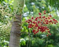 Betel palm Stock Photos