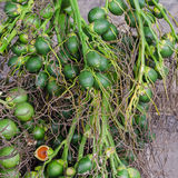 Betel palm or Betel nut Stock Photography