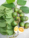 Betel palm and leaf Royalty Free Stock Image