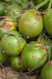 Betel palm Stock Images