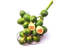 Betel palm nut fruit. Isolate on white background Stock Photos