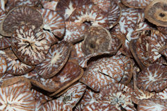 Betel seed made of cutted khat Stock Photo