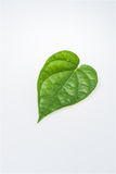 Betel Royalty Free Stock Images