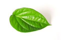 Betelblad på vit bakgrund arkivfoto