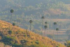 Betelpalm en Mening over de berg op de ochtend. Stock Fotografie