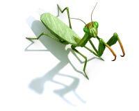 Betender Mantis auf Weiß Stockbilder