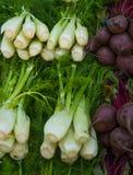 Beterrabas e cebolas Fotos de Stock