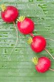 Beterrabas vermelhas Fotografia de Stock