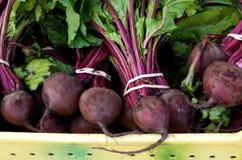 Beterrabas vermelhas frescas Foto de Stock Royalty Free