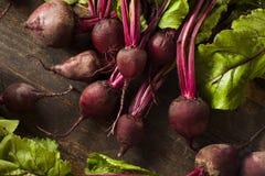 Beterrabas vermelhas orgânicas cruas Fotografia de Stock