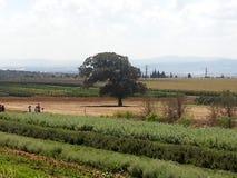 Bethlehem del Galilee Fotografia Stock Libera da Diritti