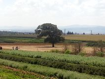 Bethlehem of Galilee. A spice farm located in Bethlehem of Galilee Royalty Free Stock Photography