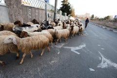 Bethlehem Shepherd Stock Photo
