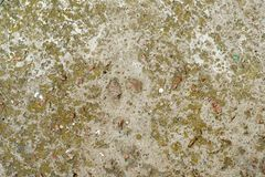 Beton bedeckt mit Moos Stockbild
