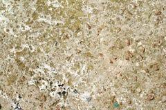 Beton met mos wordt behandeld dat stock afbeeldingen