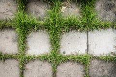 Betonblock mit grünem Gras für Beschaffenheitshintergrund Lizenzfreies Stockbild