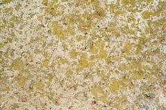 Betong som täckas med mossa Royaltyfria Foton