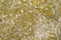 Betong som täckas med mossa Arkivbilder