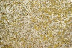 Betong som täckas med mossa Arkivfoto