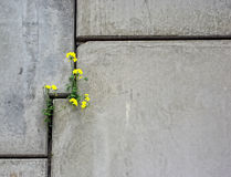 Betonmauer mit Blume Lizenzfreie Stockbilder