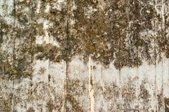 Betonmauer mit Flechte und Moos Stockfotos