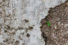Betonmauer mit grünem Sprössling Lizenzfreies Stockfoto